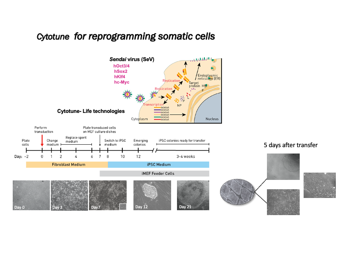 Cytotune for reprogramming somatic cells