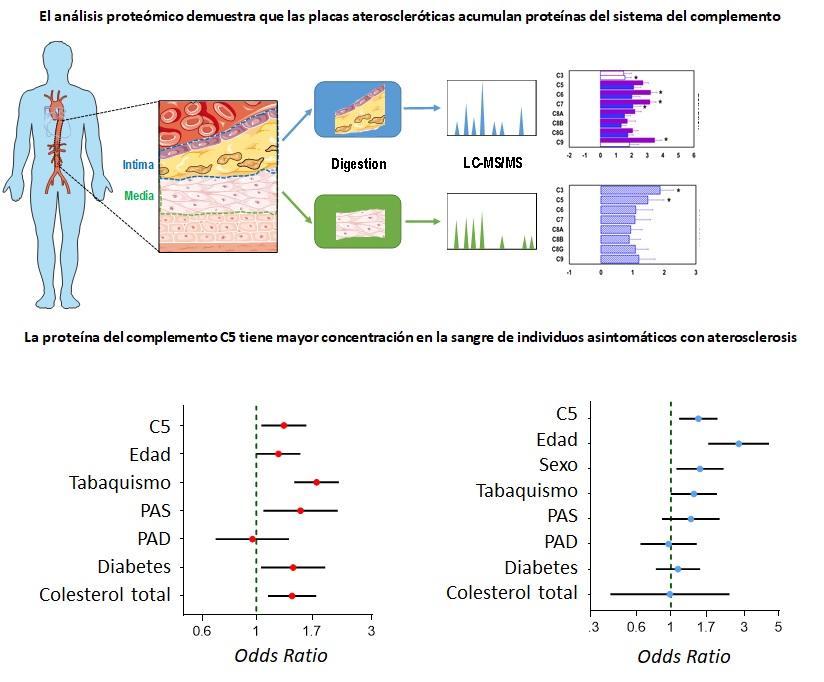 Esquema del diseño experimental del estudio y de los resultados obtenidos