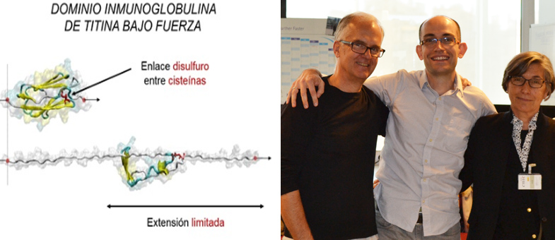 Dr. Alegre-Cebollada (center), Prof. Julio Fernández (left), and study author Carmen Badilla (right).